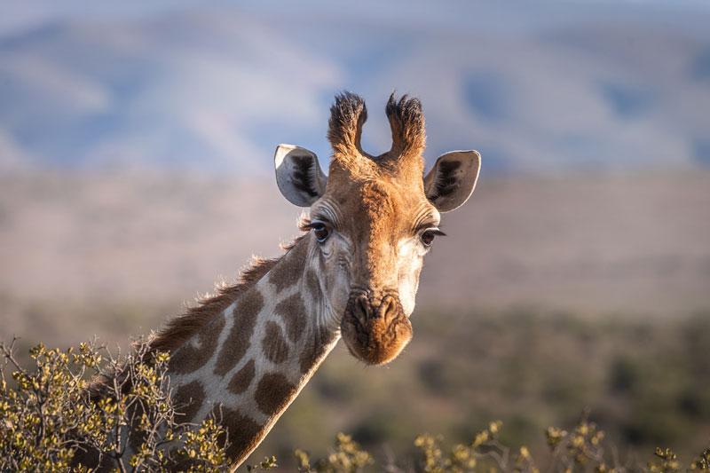 Afrique-Sud-Reserve